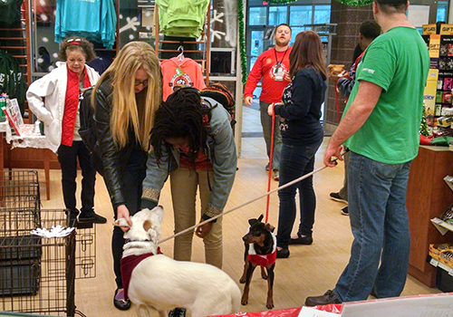 The calming effect of dogs and puppies was experienced by the students of Bainbridge State University, located in Bainbridge, GA. The dogs were brought into the bookstore as part of their DeStress Fest, held during finals.