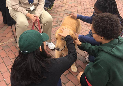 Therapy dogs were part of the William & Mary Bookstore De-Stress Event. The William & Mary Bookstore is located in Williamsburg, VA.